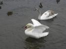 Ptaki w Oliwie