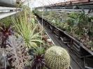 Kaktusiarnia_3