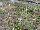 Kaktusiarnia_10