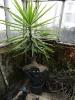 Kaktusiarnia_2