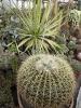 Kaktusiarnia_5