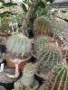 Kaktusiarnia_6
