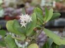 Kaktusiarnia_7