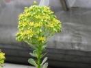 Kaktusiarnia_8